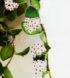 Hoya nummularioides 1