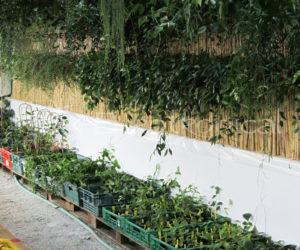 invernadero-blog-cm