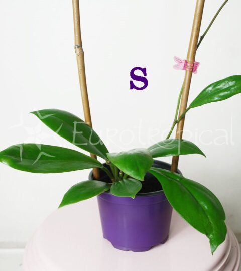 soligamia producto ss